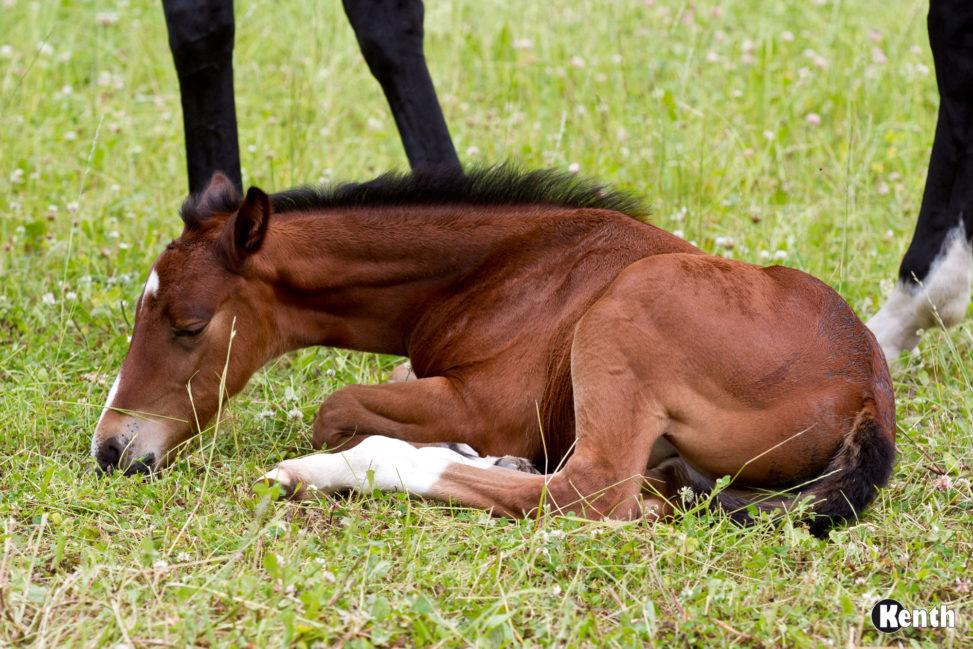 Tired foal