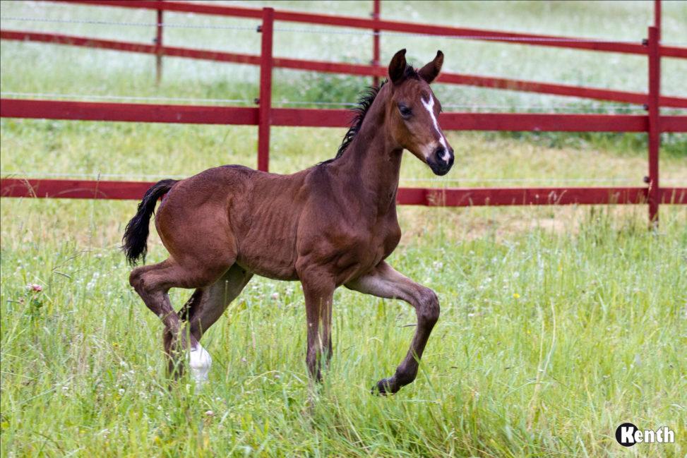 Foal, june 24th, 2016